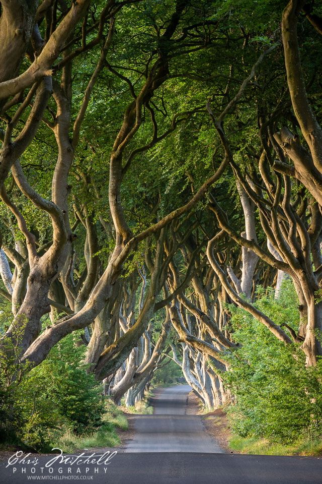 cm-20180713-Dark-Hedges-0014.jpg